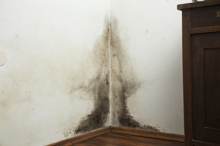 Mold Prevention after Water Damage